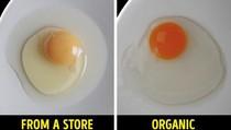 Ayam Panggang Mirip Kucing hingga Cara Mudah Cek Kualitas Makanan
