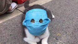 Walah! Saking Khawatir Terinfeksi Corona, Kucing pun Pakai Masker