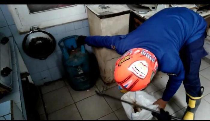 Evakuasi kobra di rumah di Polonia, Jakarta Timur. (Dok Twitter Pemadam DKI Jakarta)