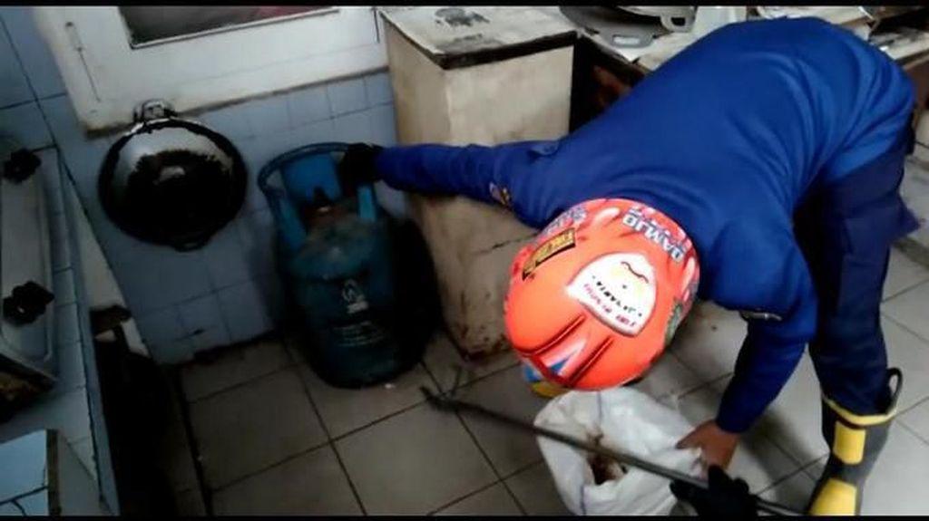 Kobra Kecil Diamankan di Rumah Dekat Restoran Cepat Saji, Jaktim