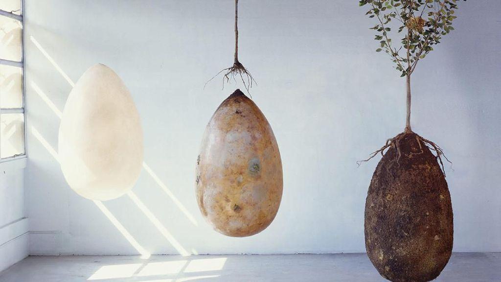 Ini Inovasi Kuburan Ramah Lingkungan, Kamu Bisa Jadi Pohon Saat Meninggal