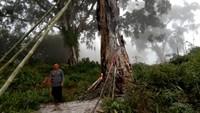 Heboh Pohon Tua di Makam Pemalang yang Tetiba Terkobar Api