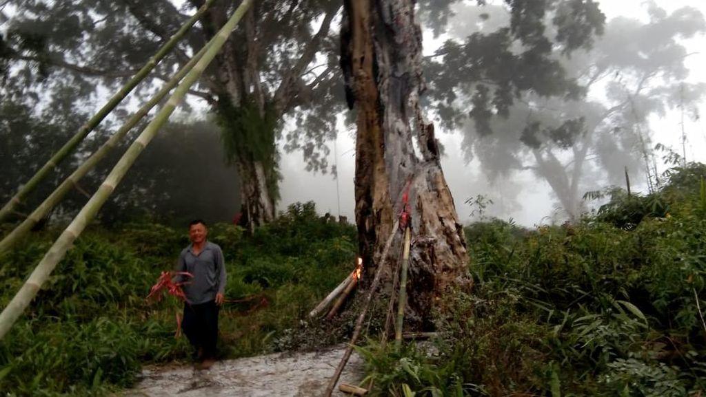 Lagi Viral! Pohon Tua di Makam Pemalang Tetiba Terbakar Misterius