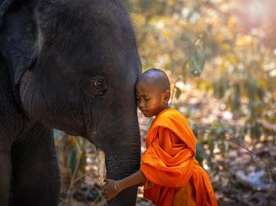 Gajah, Simbol Nasional Thailand yang Terancam Punah