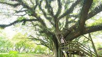 Cantiknya! De Djawatan Mirip Hutan di Negeri Dongeng