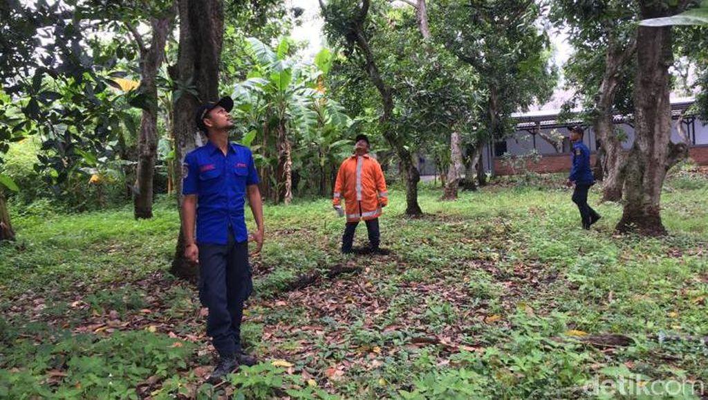 Seekor Kera Besar Teror Warga Kota Mojokerto dalam Sebulan