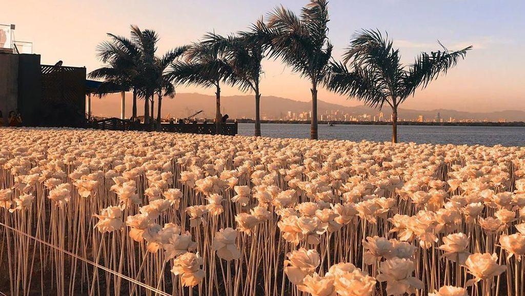 Wouw! Kafe Cantik Ini Dikelilingi 10 Ribu Mawar Putih yang Instagrammable