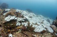 Sedih, Terumbu Karang Australia Terancam Kehilangan Warnanya