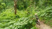 Bukan Wilis, Sentra Porang di Madiun Ternyata Ada di Gunung Pandan
