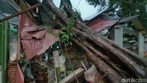 Hujan Deras Disertai Angin Kencang di Surabaya, Toko Burung Tertimpa Pohon