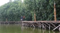 Mau Trekking di Mangrove Grand Maerokoco Semarang, Masuk Pak Eko!
