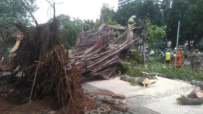 Pohon beringin tumbang di depan Monas (Arief Ikhsanudin/detikcom)