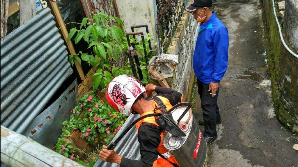 Ribuan Ulat Bulu Teror Permukiman Warga di Kota Sukabumi
