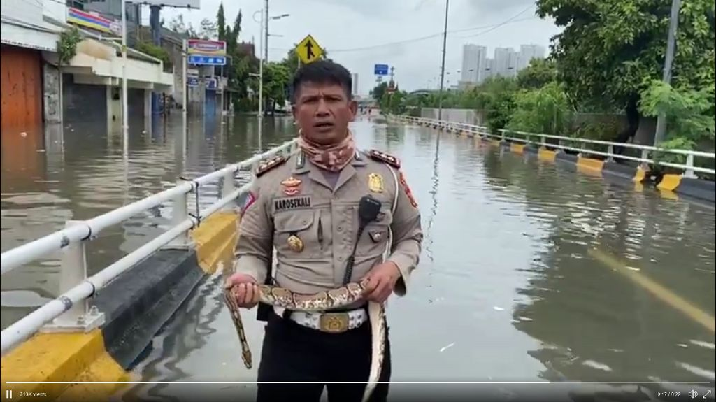 Video Polisi Jelaskan Kondisi Banjir Sambil Pegang Ular