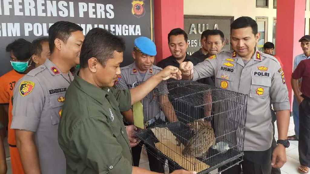 Polres Majalengka Bekuk 2 Pelaku Perdagangan Satwa Dilindungi