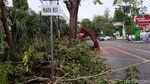 Pohon Tumbang Timpa Halte Bus di Solo