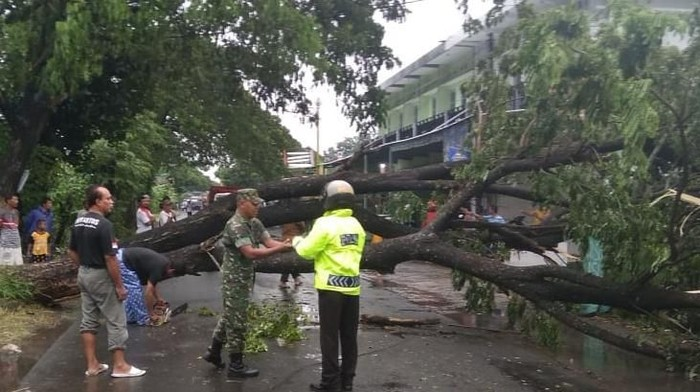 Terdampak hujan angin, pohon trembesi di jalan Pakis-Sukoharjo, Klaten tumbang, Selasa (25/2/2020).
