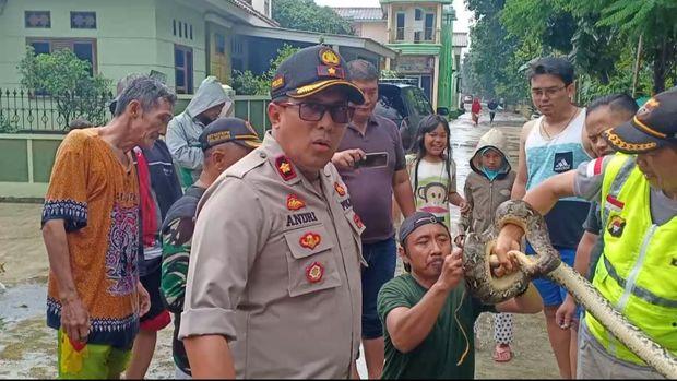 Sanca Tiga Meter Muncul di Lokasi Banjir Bojong Kulur Bogor
