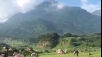 Viral! Padang Rumput Keren di Mojokerto