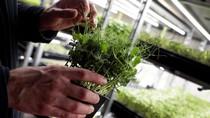 Peluang Ekspor Produk Organik Terbuka di Tengah Pandemi
