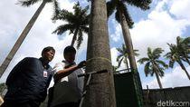 Momen Komisi Pengarah Ambil Sampel Tanah-Pohon di Monas