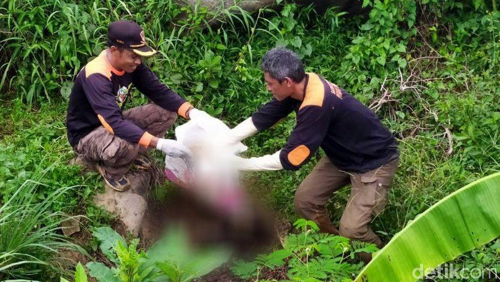 Polisi: Kerangka Berserakan di Hutan Pinus Pemalang Seorang Wanita