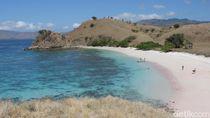 Pantai Pink Komodo yang Bikin Kangen