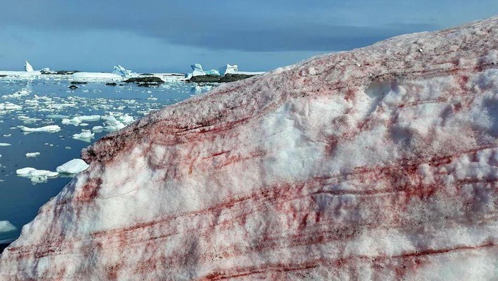 Bahaya di Balik Salju Merah Darah di Antartika