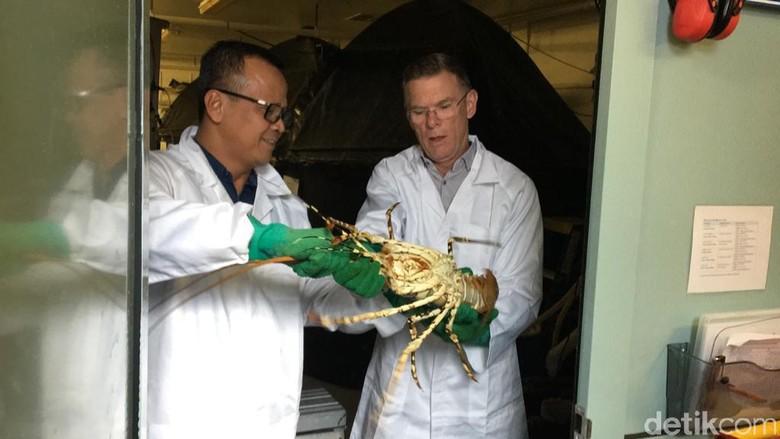 Menteri Kelautan dan Perikanan Edhy Prabowo di Tasmania, Australia.