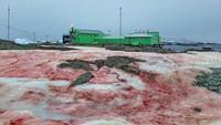 Ngeri, Salju di Antartika Berubah Jadi Merah Darah