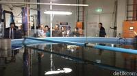 Mengintip Pusat Budi Daya Salmon Terbesar Dunia di Tasmania