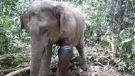 Kisah Heroik Sertu Iskandar Gugur Terinjak Gajah Liar