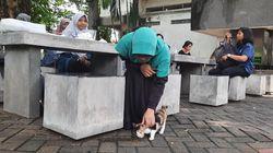 Tanggapan Mahasiswa ITS Soal Surat Edaran Kampus Bebas Kucing yang Viral