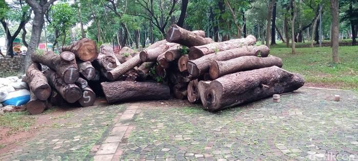 Gelondongan pohon tebangan area revitalisasi Monas. (Kadel Melda L/detikcom)