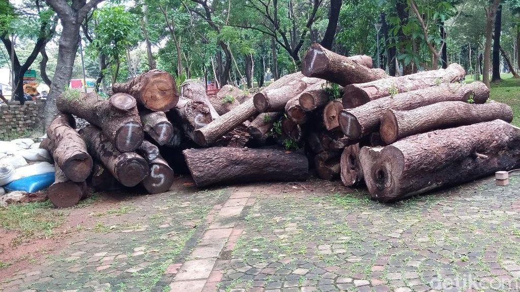 Jenis Pohon yang Jadi Gelondongan di Proyek Monas: Mahoni hingga Palem