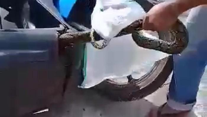 Dek bawah Honda BeAt jadi sarang ular
