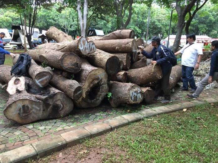 Gelondongan pohon tebangan revitalisasi Monas. (Dok Tim Asistensi Komrah Kawasan Medan Merdeka)