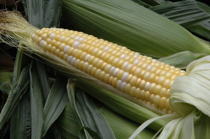 rambut jagung