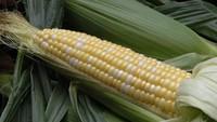 5 Makanan yang Diproduksi di China Ini Disebut Berbahaya