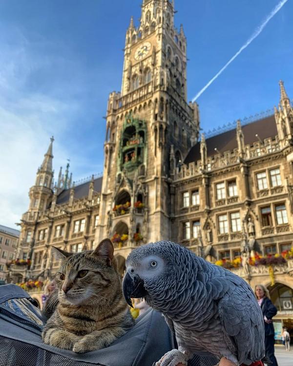 Kucing bernama Quita ditemani burung beo, Coco Lee serta pemiliknya, Robert Stephenson-Padron melakukan perjalanan keliling Eropa. Dilansir dari Metro.co.uk mereka jalan-jalan ke 30 kota di Benua Biru. (Foto: Instagram @quitathekitty)