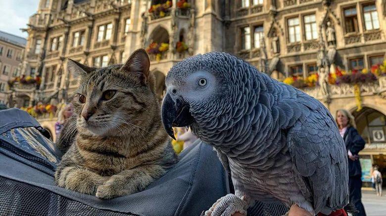 Keren! Kucing dan Burung Beo Ini Traveling Bareng Keliling Eropa