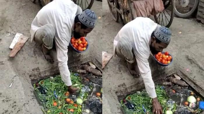 pria pungut sayuran