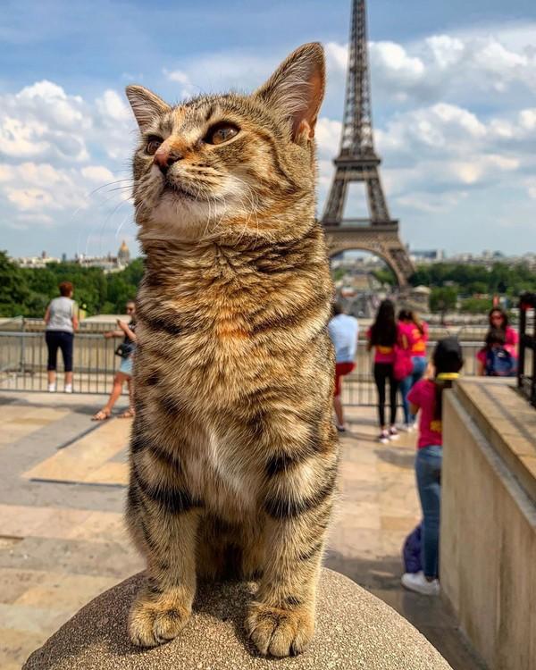 Setelah itu mereka beranjak ke Prancis. Di sana mereka sempat mampir ke Provence, Champeaux, Paris dan tentunya ke Menara Eiffel. (Foto: Instagram @quitathekitty)