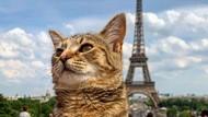 Potret Gemasnya Kucing Ini Traveling Keliling Eropa