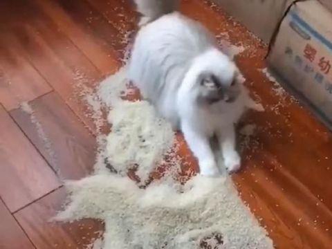 Gemas tapi Menyebalkan, 5 Aksi Kucing Obrak-Abrik Makanan