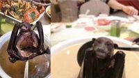 Terkait Virus Corona, Warga China Dilarang Makan Ular, Tikus dan Kura-kura