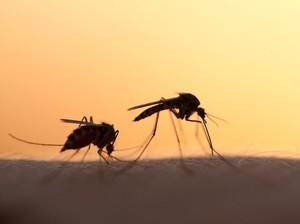 5 Cara Mengusir Nyamuk Secara Alami Tanpa Obat Semprot
