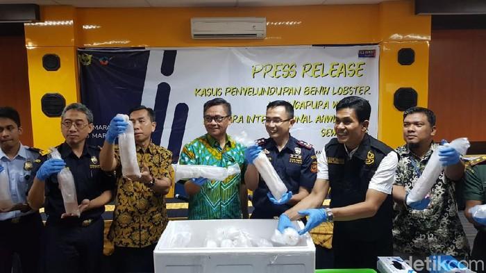 Konpers penggagalan penyelundupan babby lobster di Semarang, 6/3/2020