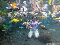 Foto di bawah air bersama ikan, siapa mau?