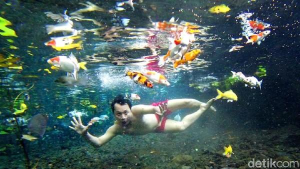 Ya, air di sini bening sekali. Traveler bisa berfoto underwater dengan ikan-ikan. Hasilnya pasti keren seperti ini! (Nur Hadi Wicaksono/detikcom)